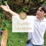 에콰도르라파파야 – 내추럴